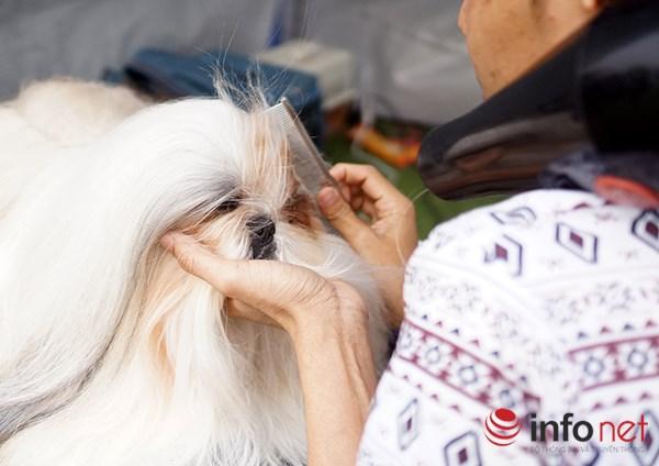 Kỳ công nghề trang điểm cho thú cưng - 3