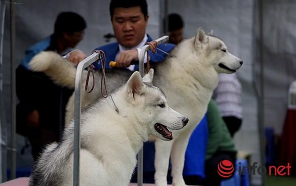 Kỳ công nghề trang điểm cho thú cưng - 5