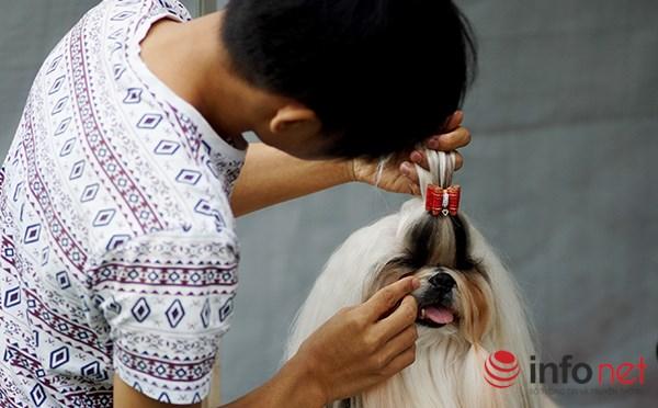 Kỳ công nghề trang điểm cho thú cưng - 6