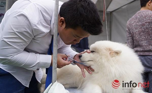 Kỳ công nghề trang điểm cho thú cưng - 8