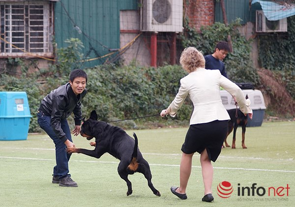 Kỳ công nghề trang điểm cho thú cưng - 9