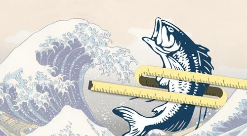 Dầu cá giúp giảm tăng cân ở giới trung niên - 1
