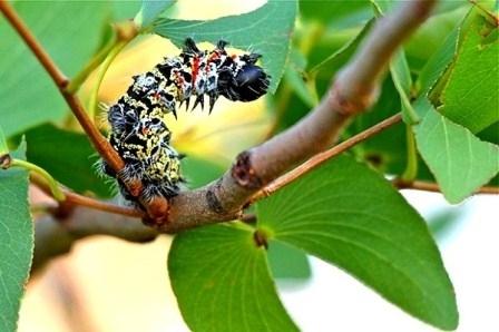 Sâu bướm, món ăn Noel kinh dị nhất thế giới - 2