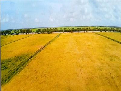 Vineco hợp tác với Trung An ra mắt sản phẩm gạo sạch - 1