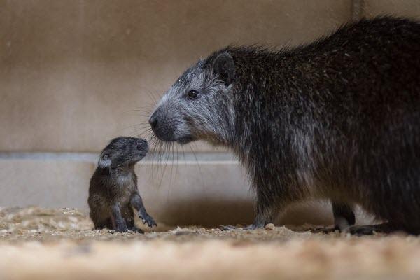 Động vật baby