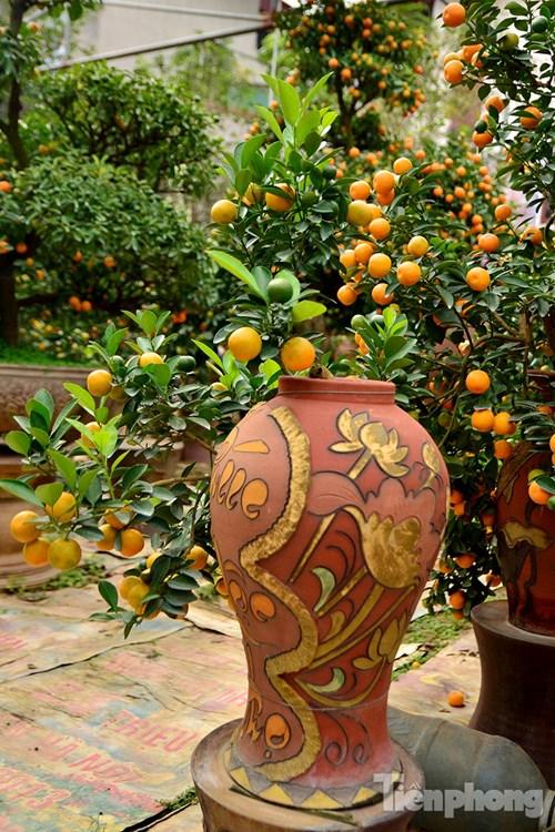 Hàng độc quất bonsai giá chục triệu cho thuê chơi Tết - 10