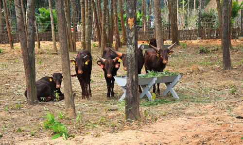 Khai trương Vinpearl Safari Phú Quốc - Vườn thú hoang dã đầu tiên tại VN - 1