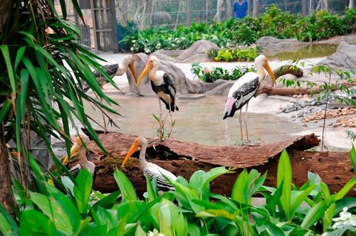 Khai trương Vinpearl Safari Phú Quốc -  Vườn thú hoang dã đầu tiên tại VN - 3