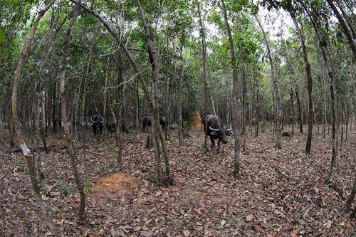 Khai trương Vinpearl Safari Phú Quốc -  Vườn thú hoang dã đầu tiên tại VN - 5