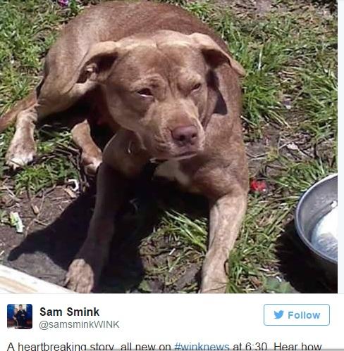 Chú chó chết vì bảo vệ chủ nhân khỏi kẻ xấu - 2