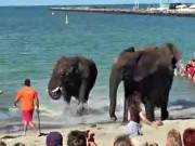 """Điểm du lịch - Đàn voi """"nổi điên"""" trên bãi biển khiến du khách hú hồn"""