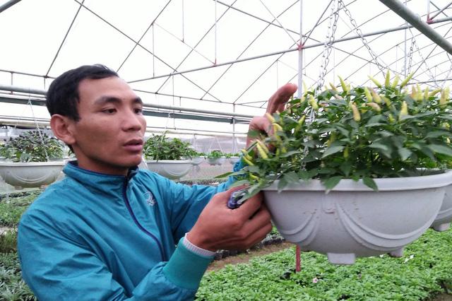 Choáng với hạt giống cây cảnh lạ giá 250.000 đồng - 1
