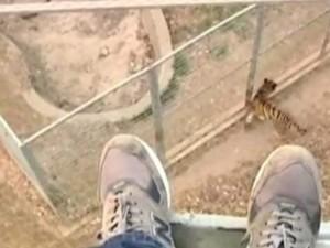 Clip: Nhảy vào chuồng hổ để thể hiện... tài nhào lộn