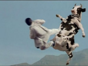 Cười chảy nước mắt với màn kungfu bò sữa