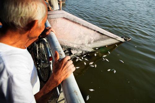 Hà Nội: Cá chết bất thường, nổi trắng ven Hồ Tây - 2