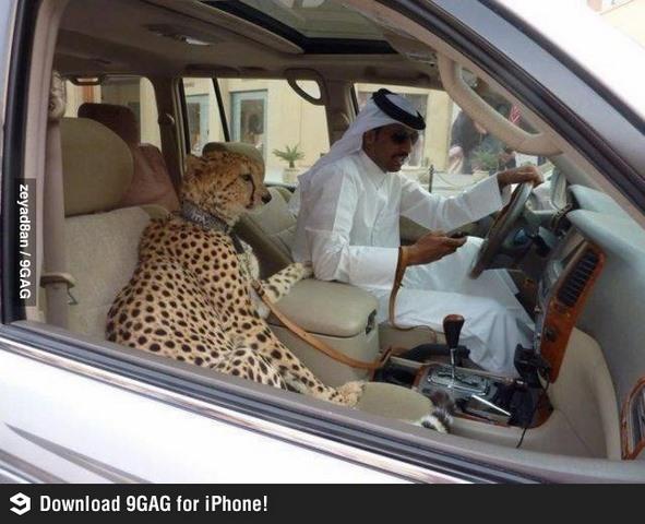 Giới siêu giàu Ả Rập khoe đẳng cấp, báo săn chết hàng loạt - 3