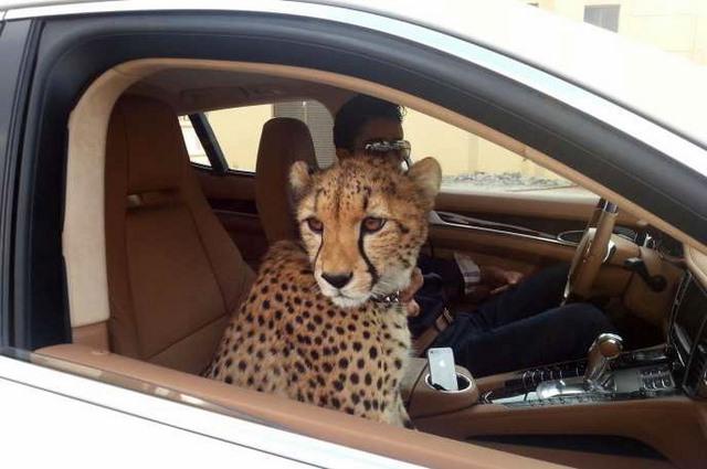 Giới siêu giàu Ả Rập khoe đẳng cấp, báo săn chết hàng loạt - 1