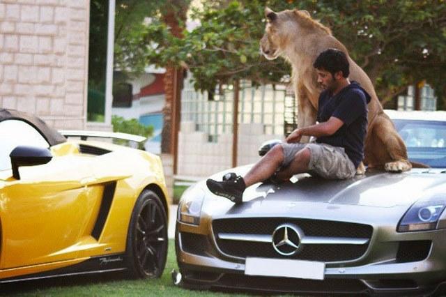 Giới siêu giàu Ả Rập khoe đẳng cấp, báo săn chết hàng loạt - 4
