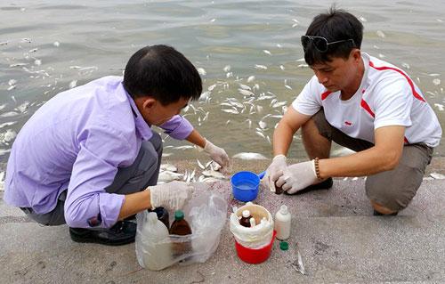 Đặt máy tạo oxy công suất lớn cứu cá Hồ Tây - 7