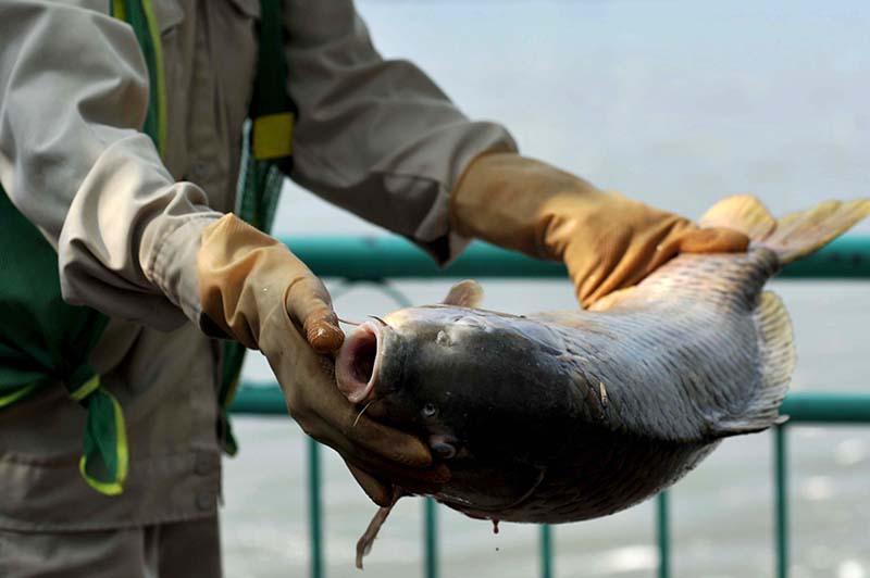 Đặt máy tạo oxy công suất lớn cứu cá Hồ Tây - 5
