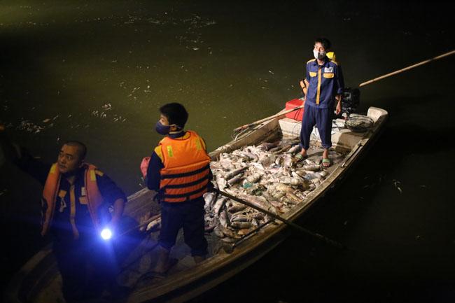 Chùm ảnh: Trắng đêm vớt cá chết ở Hồ Tây - 3