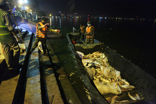 Chùm ảnh: Trắng đêm vớt cá chết ở Hồ Tây - 6