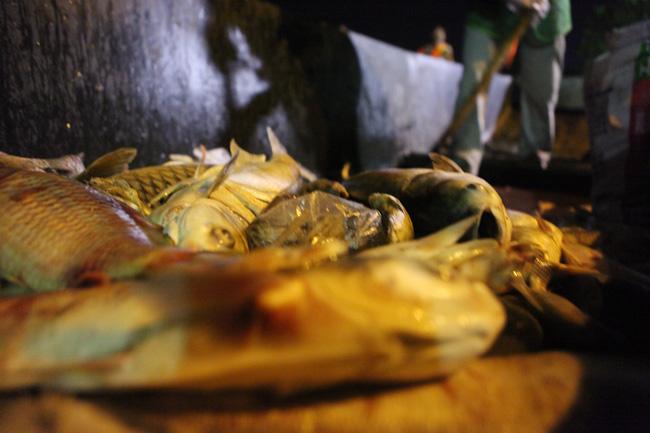 Chùm ảnh: Trắng đêm vớt cá chết ở Hồ Tây - 10