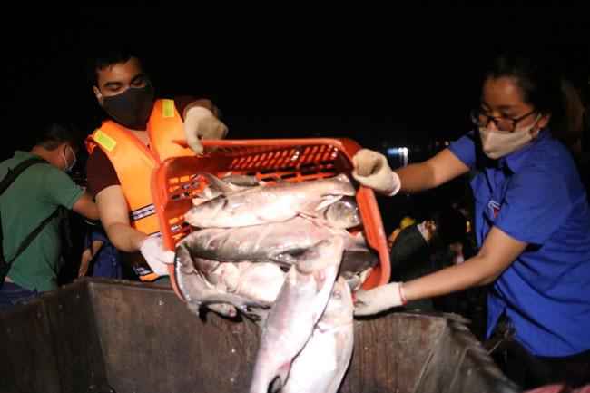 Chùm ảnh: Trắng đêm vớt cá chết ở Hồ Tây - 7