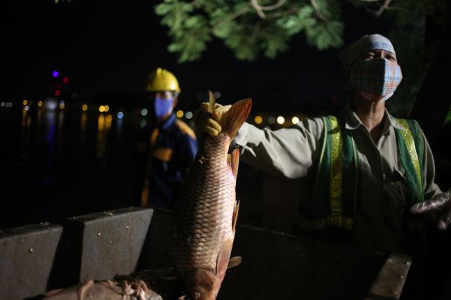 Chùm ảnh: Trắng đêm vớt cá chết ở Hồ Tây - 8