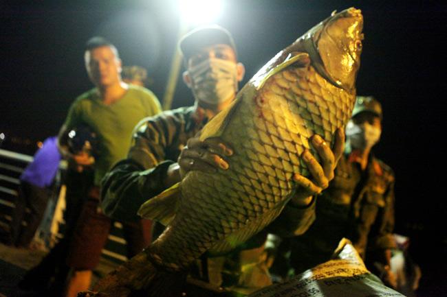 Chùm ảnh: Trắng đêm vớt cá chết ở Hồ Tây - 12