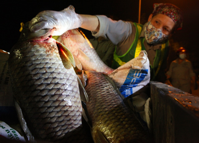 Chùm ảnh: Trắng đêm vớt cá chết ở Hồ Tây - 13