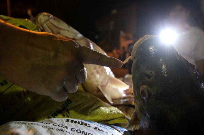 Chùm ảnh: Trắng đêm vớt cá chết ở Hồ Tây - 14