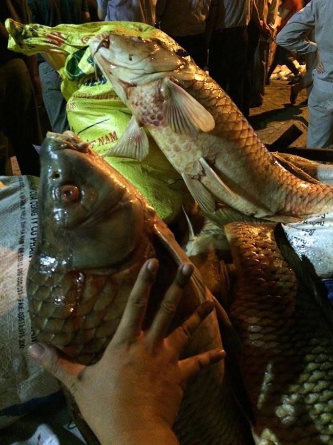 Chùm ảnh: Trắng đêm vớt cá chết ở Hồ Tây - 15