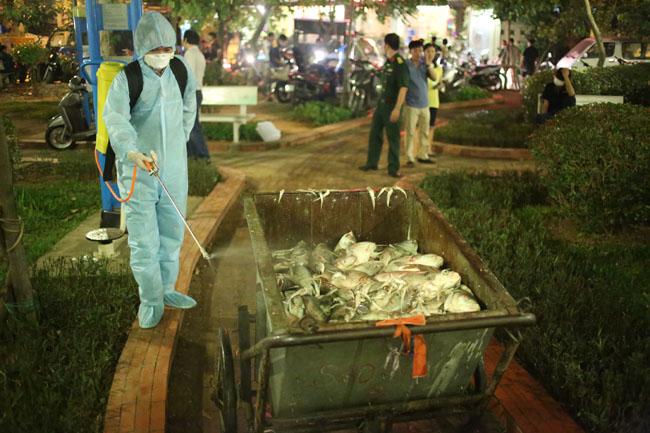 Chùm ảnh: Trắng đêm vớt cá chết ở Hồ Tây - 17