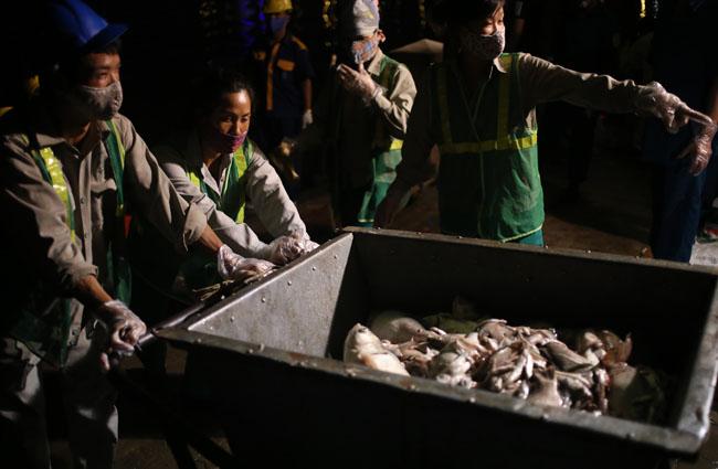 Chùm ảnh: Trắng đêm vớt cá chết ở Hồ Tây - 22