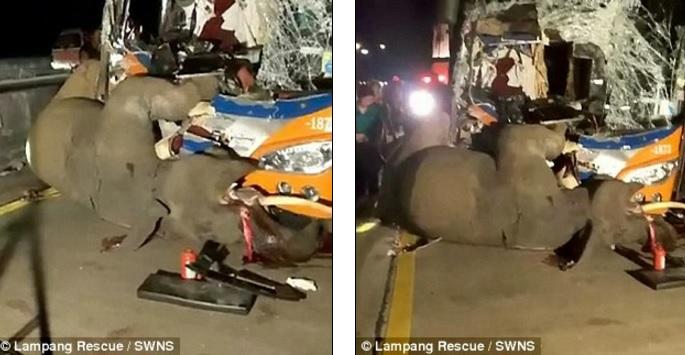 Thái Lan: Xe bus đấu đầu voi sổng chuồng, kết cục bi thảm - 1