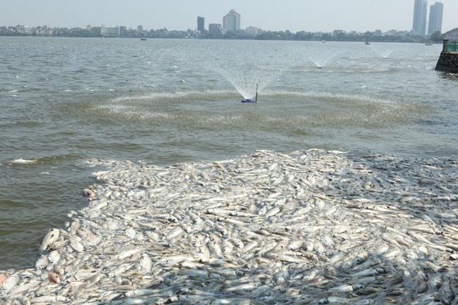 Cá chết ở Hồ Tây: Dân bịt mũi, quán đóng cửa vì mùi hôi thối - 11