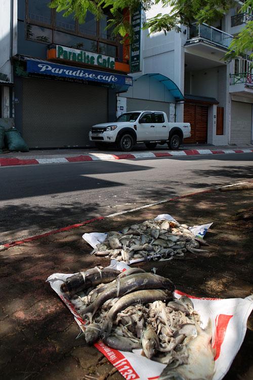Cá chết ở Hồ Tây: Dân bịt mũi, quán đóng cửa vì mùi hôi thối - 9