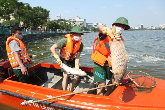 Cá chết ở Hồ Tây: Dân bịt mũi, quán đóng cửa vì mùi hôi thối - 13