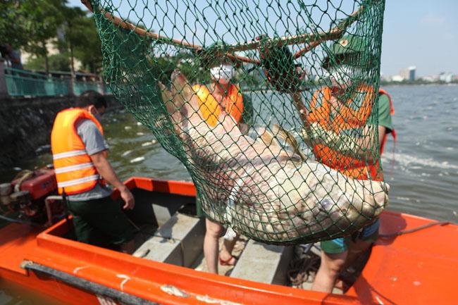 Cá chết ở Hồ Tây: Dân bịt mũi, quán đóng cửa vì mùi hôi thối - 14
