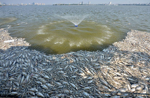 Lắp máy sục khí tạo ôxy, cá Hồ Tây vẫn chết hàng loạt - 3