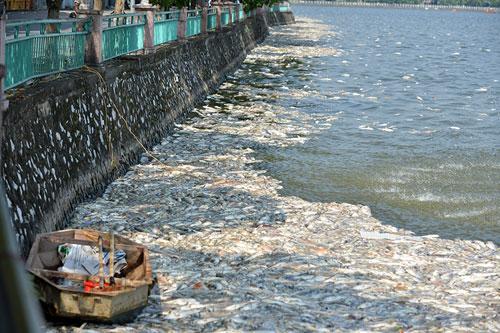 Lắp máy sục khí tạo ôxy, cá Hồ Tây vẫn chết hàng loạt - 4