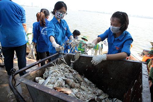 Lắp máy sục khí tạo ôxy, cá Hồ Tây vẫn chết hàng loạt - 6