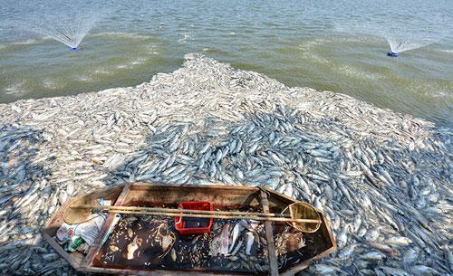 Lắp máy sục khí tạo ôxy, cá Hồ Tây vẫn chết hàng loạt - 5
