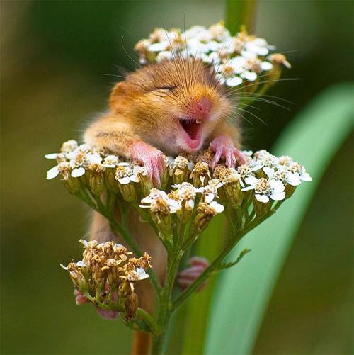 Loài vật cười khác loài người như thế nào! - 1