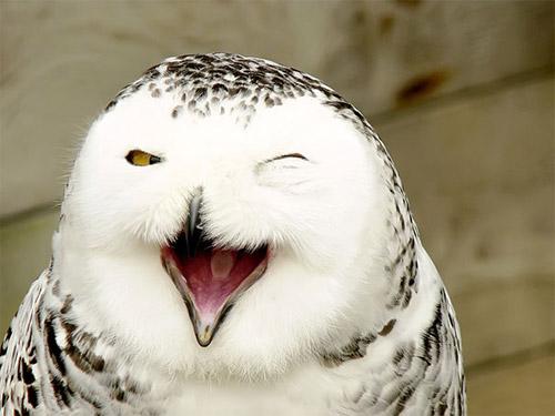 Loài vật cười khác loài người như thế nào! - 4