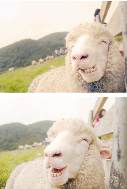 Loài vật cười khác loài người như thế nào! - 11