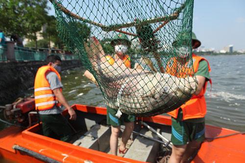 Hà Nội vớt hơn 60 tấn cá chết ở Hồ Tây trong 3 ngày - 1