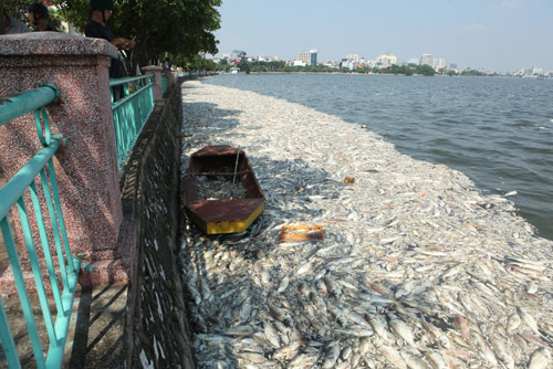 Hà Nội vớt hơn 60 tấn cá chết ở Hồ Tây trong 3 ngày - 4
