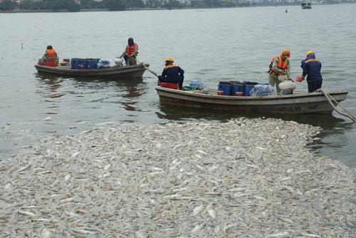 Hà Nội vớt hơn 60 tấn cá chết ở Hồ Tây trong 3 ngày - 2